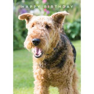 Happy Birthday -kortti koira